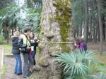 Деревья-патриархи города Сочи